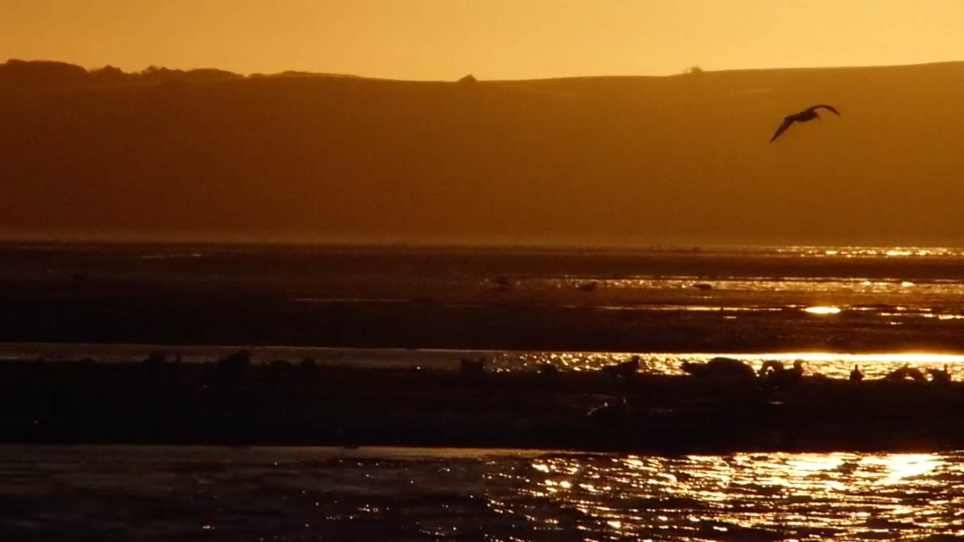 Mudflats Feeding Frenzy at Sundown