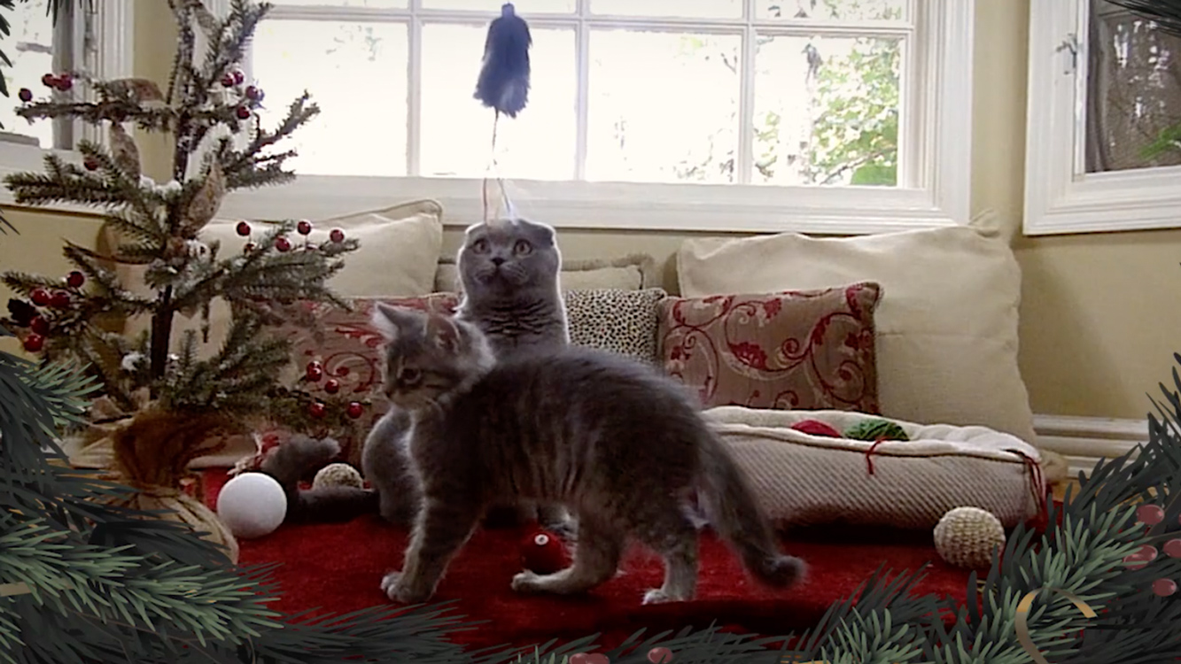 Holiday Kittens